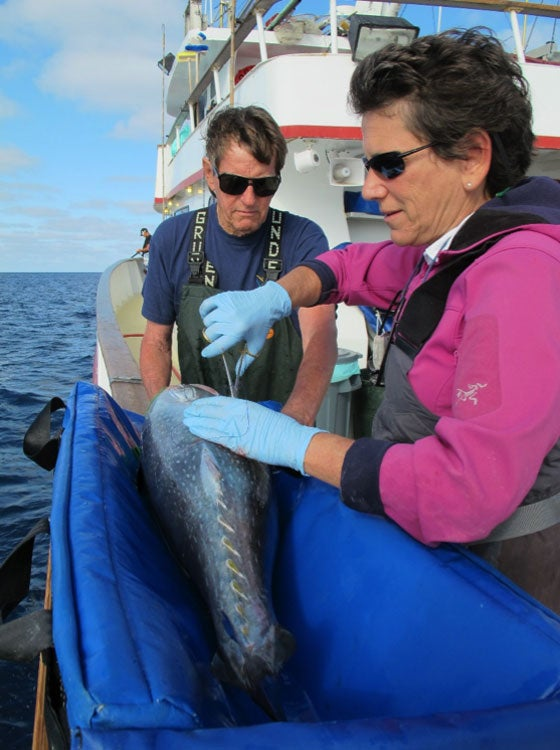 Barbara Block and Charles Farwell tag a Pacific bluefin tuna