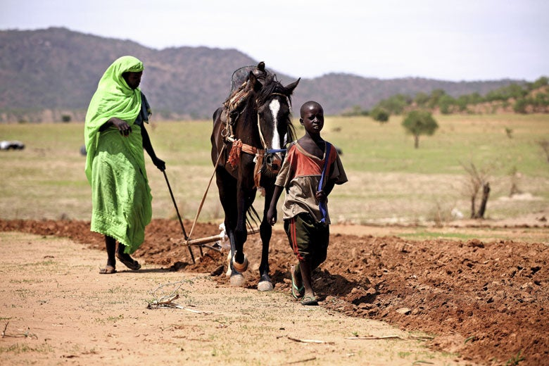 Woman and boy plowing field with horse in Chad / Derek Sciba/USAID